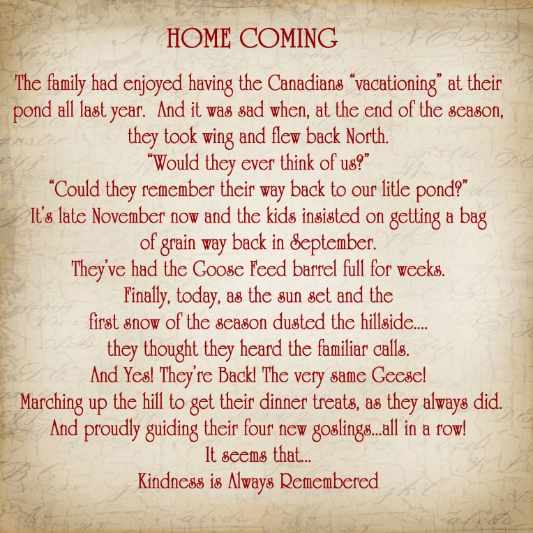 Home Coming Story